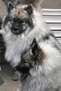 Hundeerziehung im garten - 2 part 4